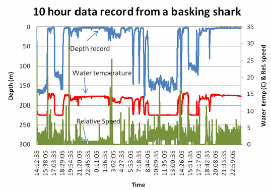 Diving profile of a basking shark
